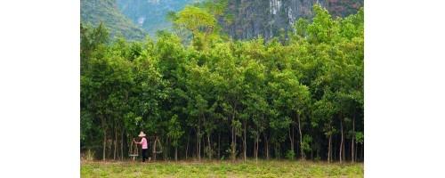 Κίνα: Δενδροφύτευση 84.000 τετραγωνικών χιλιομέτρων για την καταπολέμηση της ατμοσφαιρικής ρύπανσης